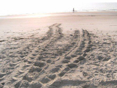 We're hoping your mermaid getaway includes a turtle crawl on tybee island ga