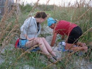 Thanks to the Tybee Sea Turtle Project Facebook Page