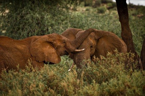the elegance of elephants: an afternoon safari soiree