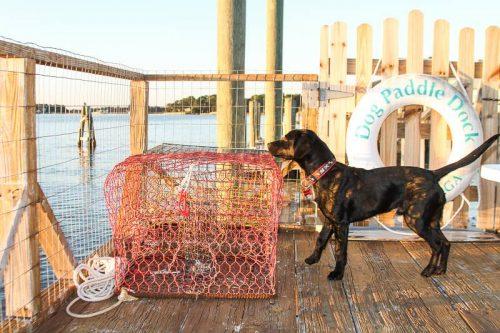 Traveling with pets on tybee island ga