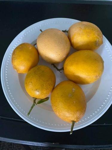 the midwest mermaid lemons