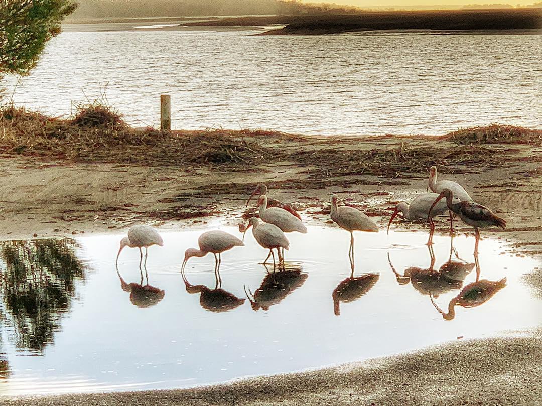 tybee island bird watching by cindi dunn photography