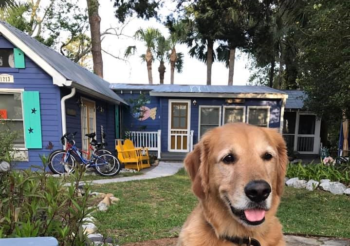 pet friendly fish camp cottage