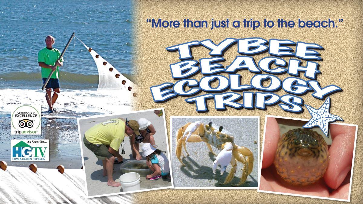 tybee beach ecology trips